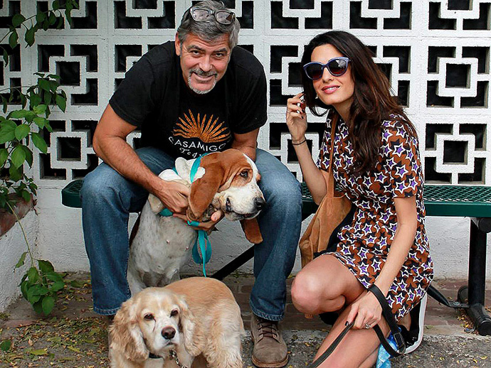 George & Amal Clooney with Bassset Hound Millie & Cocker Spaniel Louie.jpg