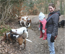 Basset Hounds on walk from Broadstone Car Park, Ashdown Forest, 2008