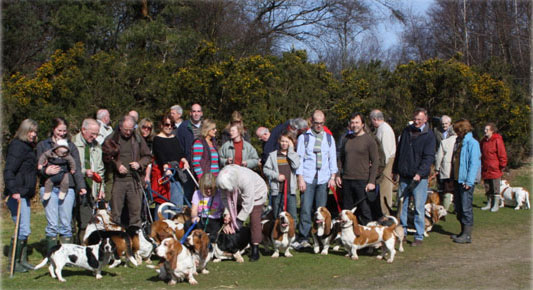 Basset Hound Owners group photo
