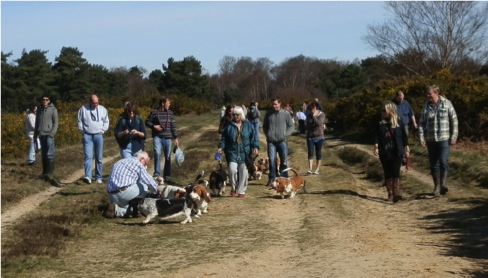 Basset Hounds on Ashdown Forest
