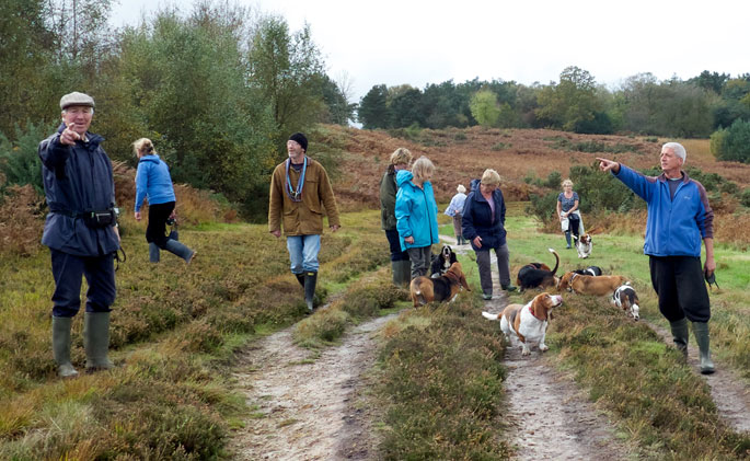 Walking with Basset Hounds on Ashdown Forest